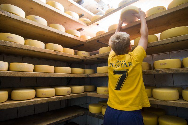 Tolmin Cheese